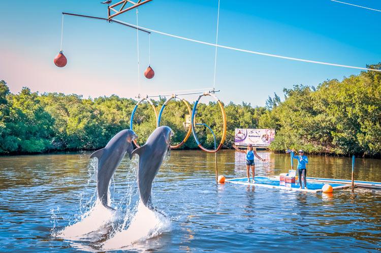"""Varadero delfines parque acuatico - Fotos de: """"Varadero, una playa con múltiples encantos"""""""