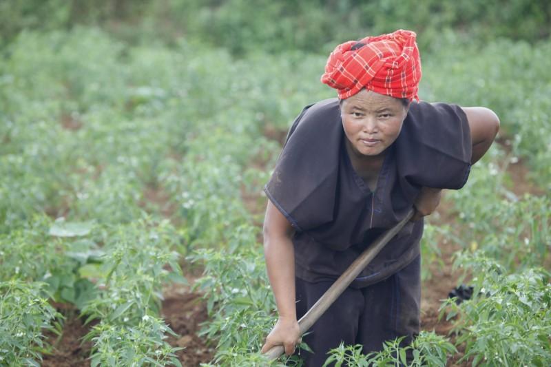 myanmar campesina trabajo campo - Myanmar; el tesoro étnico