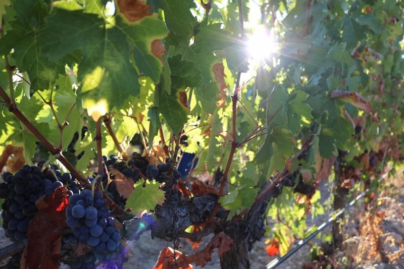 personas uvas Vides Valladolid - Valladolid es vino