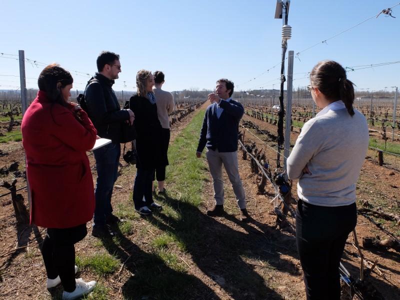 visitas viñedo personas campo - La Ruta del Vino Ribera del Duero presenta su web como una eficaz herramienta de comercialización