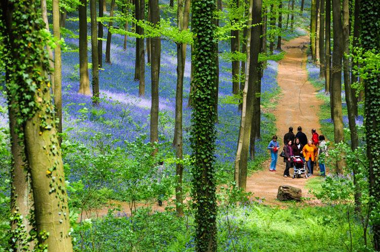"""Hallerbos 6 Belgica Bosque de campanillas azules - Fotos de: """"Hallerbos y 'el bosque de campanillas azules'"""""""