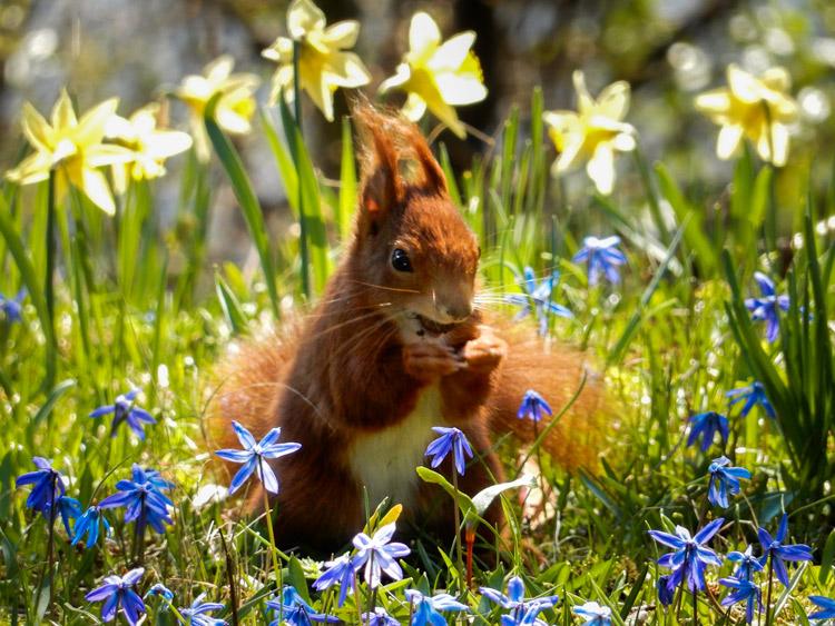 """Hallerbos 7 Belgica Bosque de campanillas azules - Fotos de: """"Hallerbos y 'el bosque de campanillas azules'"""""""
