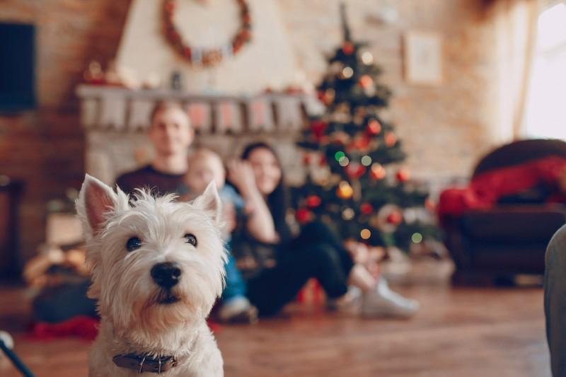 perro pareja arbol navidad - Cómo preparar a nuestra mascota para la llegada de un bebé