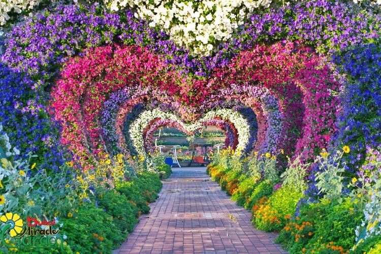 Dubai Miracle Garden - Viaja a Dubái sin mover un dedo, desde el sofá