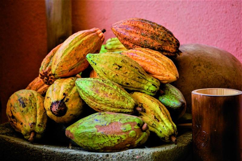 chocolate Cacao ©Julia Nigh - Multipropuestas Más Viajes 67