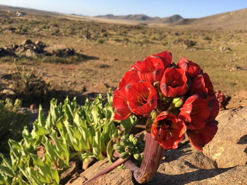 vegetacion chile desierto flor paisaje - Viaja por Chile con diez películas que te harán soñar