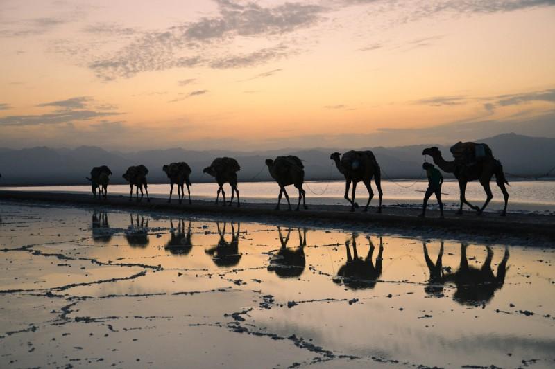 Etiopia DAnakil Camellos © Annerose Mehnert - Depresión del Danakil Etiopía