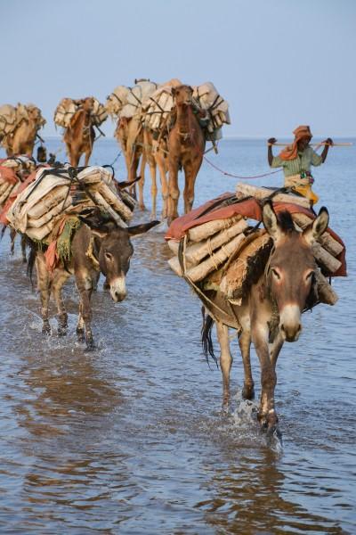 burros etiopia danakil © Annerose Mehnert - Depresión del Danakil Etiopía
