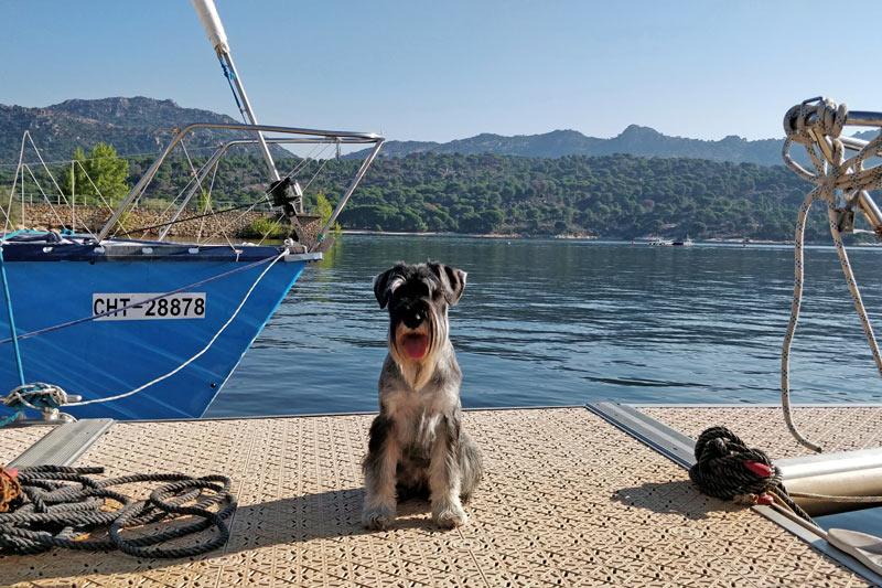 TopperCan perro  - Viaja a cualquier destino con tu mascota
