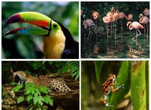 Animales exóticos Centroamérica y República Dominicana 300x220 - Revista Más Viajes