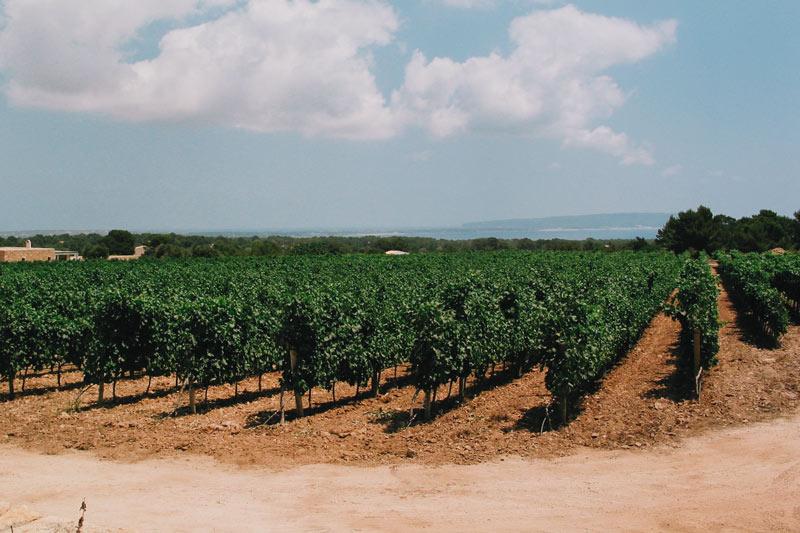 Bodega Cap Barbaria Formentera - Ruta de vinos... por Formentera