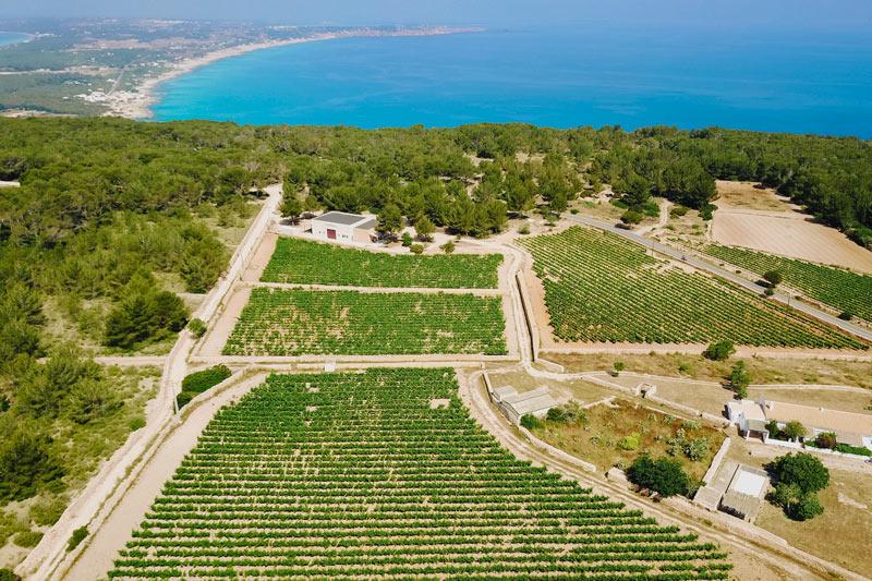 Bodega Terramoll Formentera - Ruta de vinos... por Formentera