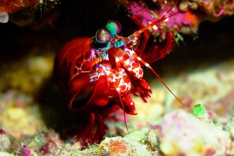 mar camaron coral - Paraíso del surf, BYRON BAY