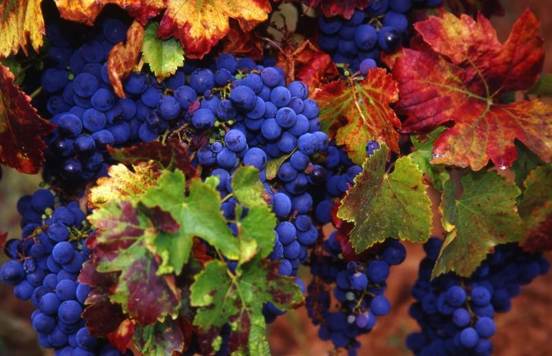 Legado del Vino