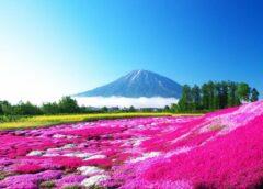 Declaran Patrimonio Mundial Natural de la UNESCO a cuatro destinos en Japón