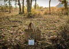 Salamanca en otoño, paraíso micológico para los amantes de la naturaleza